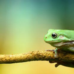 Frog Workshop