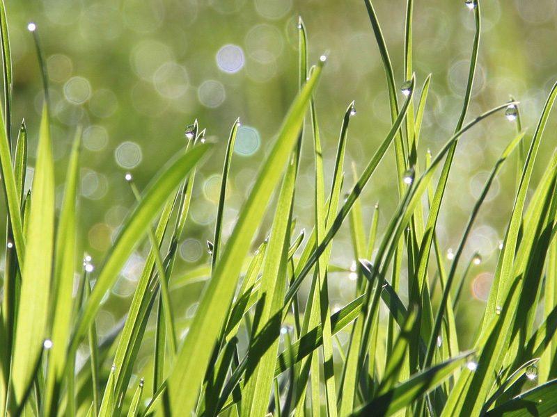 soil health field day